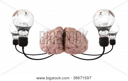 Brain And Lightbulb Imagination White