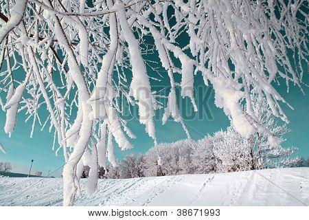 boom in de sneeuw op de hemelse achtergrond