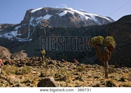 Kilimanjaro Barranco Hut Camp