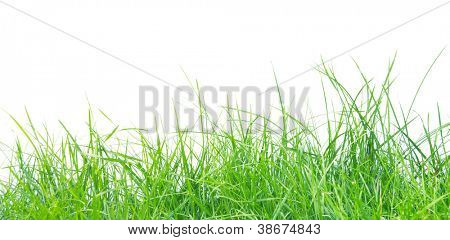 Fresh spring green grass panorama isolated on white background.