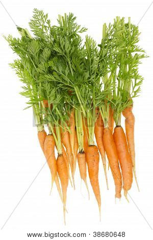 Rural Ecological Ugly Carrot