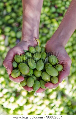 Hands Holding Olives
