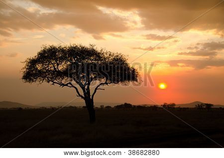 Setting Sun Shinning With Single Acacia Tree In Africa