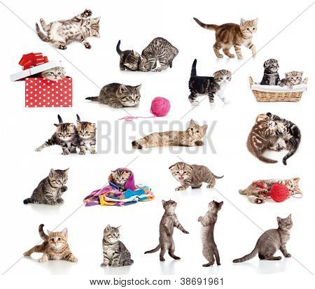 Active kittens collection. Little funny cats isolated on white.