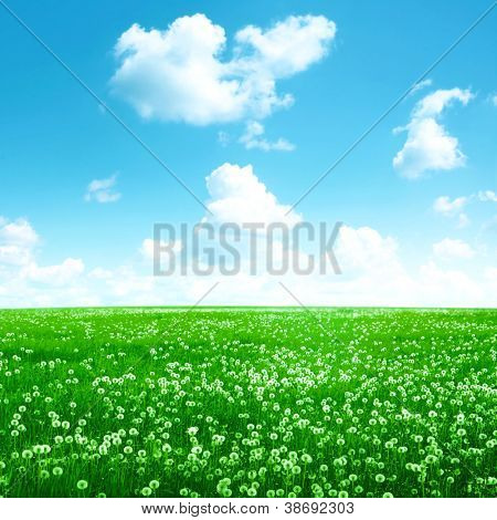 Bright blue sky with white clouds over white dandelion field.