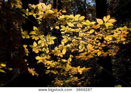 Brilliant Foliage