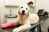 stock photo of vets surgery  - Female Veterinary Surgeon Treating Dog In Surgery - JPG
