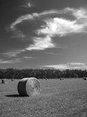 picture of hay bale  - Bales of Hay in a Field under an open sky - JPG