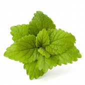 foto of peppermint  - Peppermint or  mint bunch isolated on white background cutout - JPG