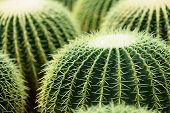 stock photo of cactus  - cactus - JPG