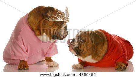 Bulldog Love