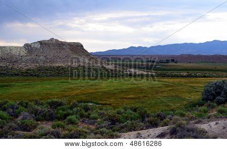 Desert Meadow After a storm