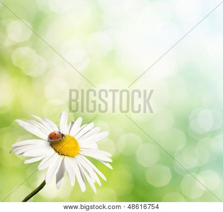 natural green background with selective focus. isolated daisy on blur background