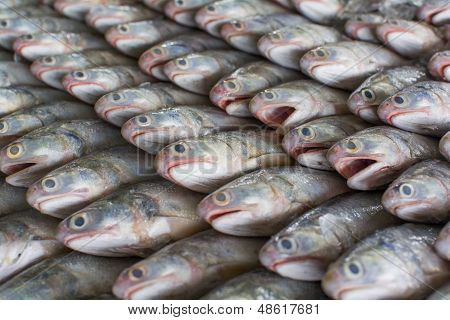 A Group Of Fish That Ready To Wholesale In Fish Market In Thailand