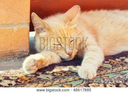 Sleeping Red Cat