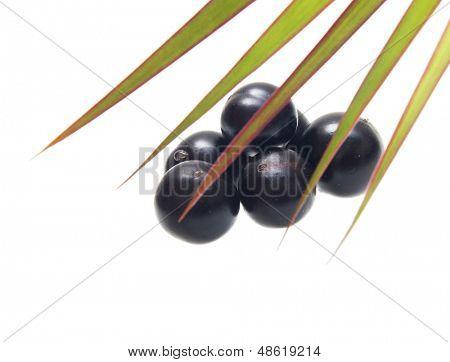 Amazon acai fruit with palm leaves isolated on white background.
