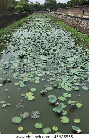 River with Water Lillies