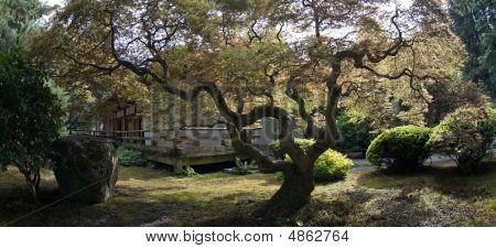 Tree, Japanese Garden