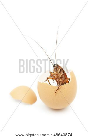Cockroach in cracked egg