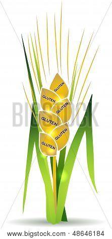 Wheat, gluten
