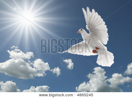 Pigeon In The Sky