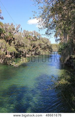 St Johns River - Manatee Cove