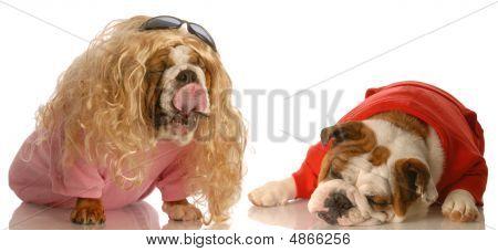 Amor de Bulldog