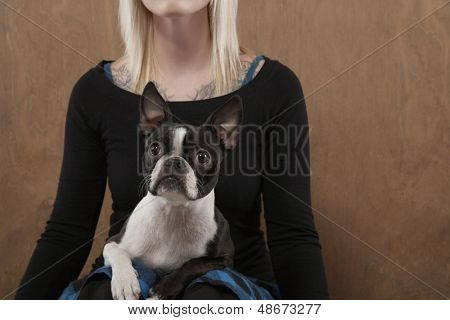 Midsection of young woman with French Bulldog on her lap over colored background