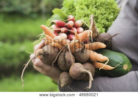 Closeup of woman with freshly harvested vegetables at garden