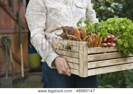 Midsection of woman carrying crate full of freshly harvested vegetables in garden
