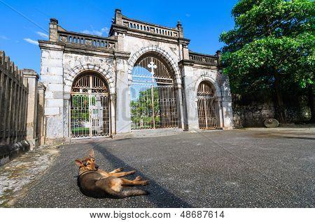 A Dog In Front Phat Diem Cathedral Gate, Kim Son, Ninh Binh, Vietnam