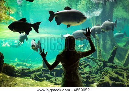 Silhouette of young woman watching fishes at the oceanarium