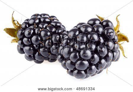 Two Ripe Blackberry (macro)