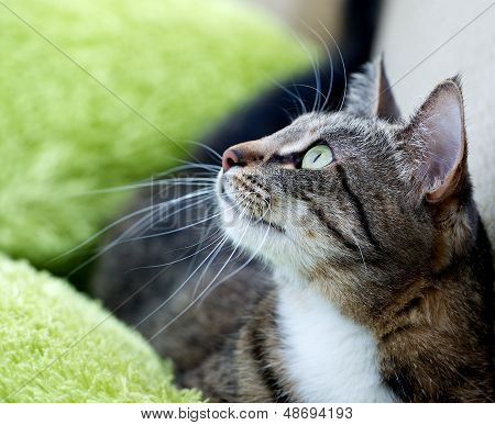 Cat portrait close up,body crop, looking to the top, cat in light blur green background  looking, ca