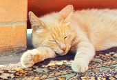 stock photo of orange kitten  - lazy red cat is sleeping near brick wall - JPG