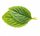 pic of mint-green  - Green mint leaves isolated on white background - JPG