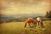 stock photo of feeding horse  - Two horses and foal  in meadow - JPG