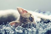 stock photo of puss  - This is cute photo of lying kitten - JPG