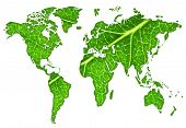 stock photo of green leaves  - Macro of a green maple leaf cut out in the shape of the continents - JPG