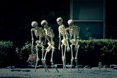 stock photo of skeleton  - Walking skeletons - JPG