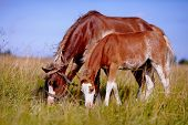 foto of horses eating  - Red horses - JPG