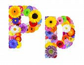 foto of letter p  - Letter P of Flower Alphabet Isolated on White - JPG