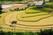 picture of yen  - Small stilt houses on terraced field - JPG