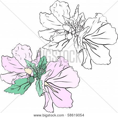Beautiful Flowers Mallow, Stencil And Color Variant.eps