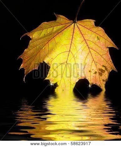 Sinking Autumn Leaf