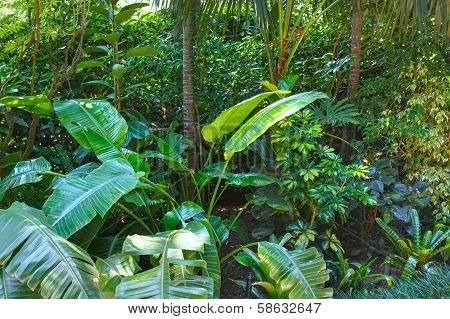 Subtropical Plants In Summer City Park Grove