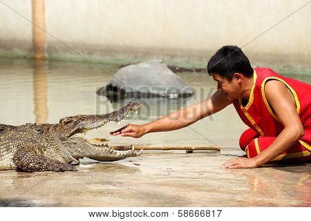 The Trainer Put Hand Into The Jaws Of A Crocodile