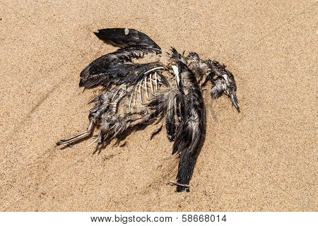 Dead Seabird On The Beach
