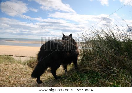 Dog On Alnmouth Beach