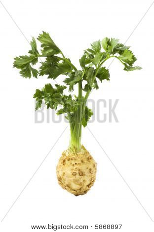 Root Of Celery With Leaves Isolated